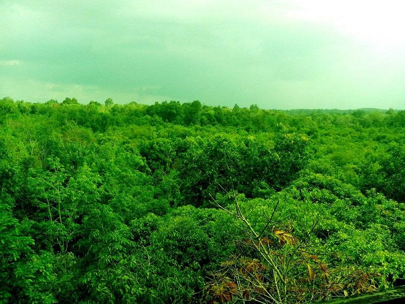 Belantara Hutan Palawan