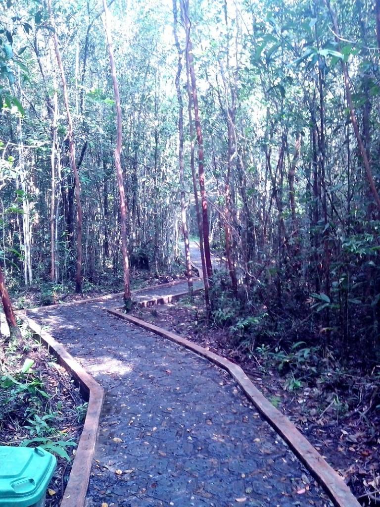 Kayu hutan Palawan